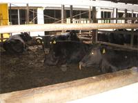 施工後の牛は寝ていて、とてもリラックスしている様子でした。